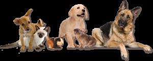 header-animals