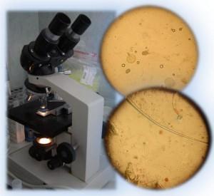mikroszkopos-vizsgalatok